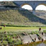 A spasso nella terra del Mito e delle Gravine. Una passeggiata naturalistica tra ferrovie abbandonate, villaggi rupestri e ulivi secolari
